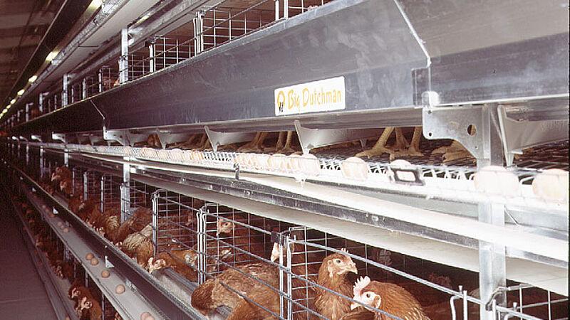 Виробництво яйця в клітках UNIVENT