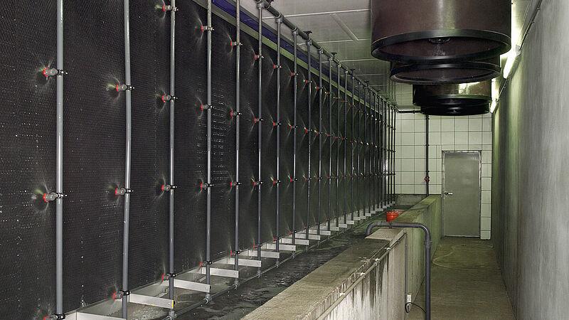 Очищення відпрацьованого повітря у свинарстві - MagixX
