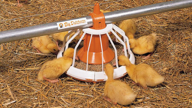 Виробництво м'яса: годівниця Big Pan Plus для качок