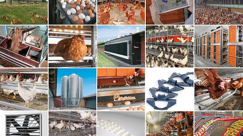 Сучасне виробництво яйця