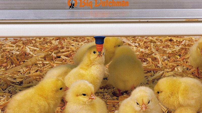 Відгодівля: ніпельні напувалки SaniStar для курчат фірми Big Dutchman