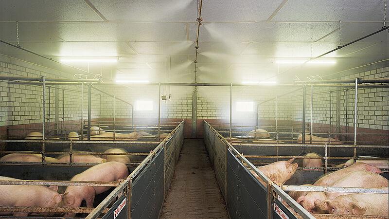 Свинарство: система розпилення CombiCool на основі високого тиску